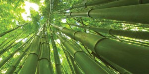 giant-bamboo-644x320